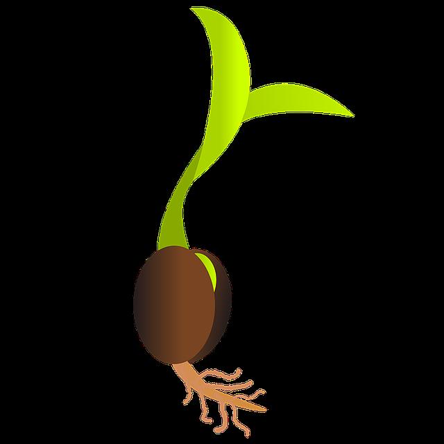 vývoj ze semínka.png