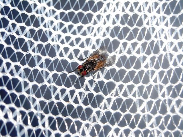 moucha na síťce